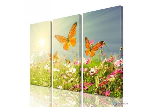 Модульная картина Бабочки ADNA0145