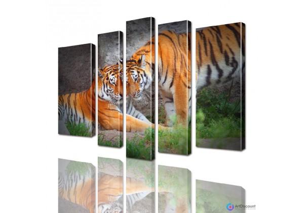 Модульная картина Тигры AANI5_0015