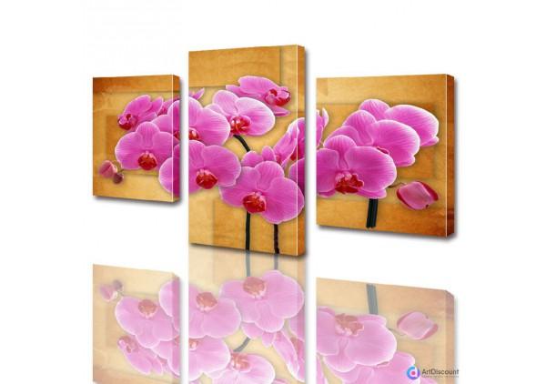 Модульные картины цветы Розовая Орхидея ADFL0004