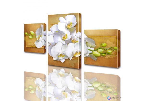 Модульные картины цветы Белая Орхидея ADFL0008