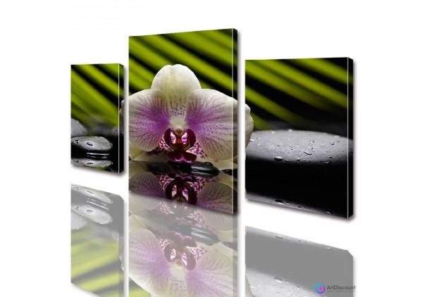 Модульные картины цветы Орхидея на камнях ADFL0009