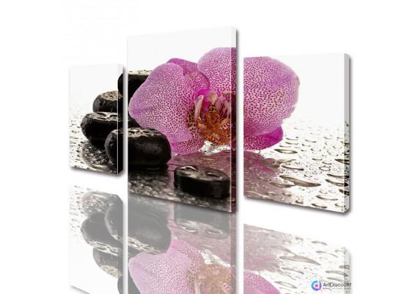 Модульные картины цветы Розовая Орхидея на камнях ADFL0010