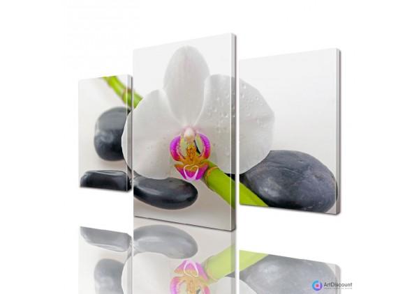 Модульные картины цветы Орхидея на камнях ADFL0016